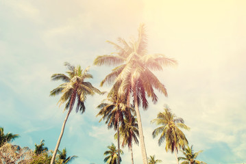 Group Palm Trees Vintage Effect Travel Design