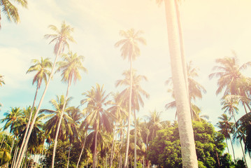 Group Tropical Palm Trees Toned Effect Landscape