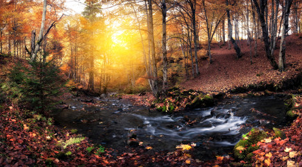 Creek at autumn colors forest