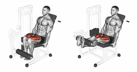 Leg extension in the simulator on quadriceps. Exercising for bodybuilding Target muscles are marked in red. 3D illustration