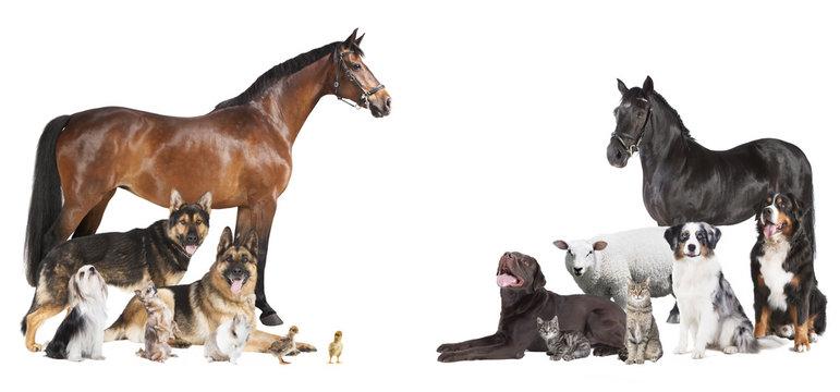viele Tiere Collage