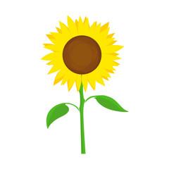 Sunflower Vector Symbol