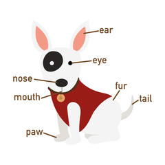Illustration of dog vocabulary part of body