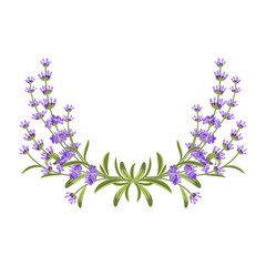 Wall Mural - Lavender bunch. Vector floral frame