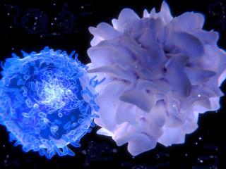 Dendritische Zelle interagiert mit einem  T-Lymphozyt  und präsentiert dabei Antigene.