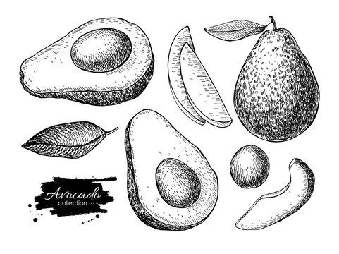 Vector hand drawn detailed avocado set. Sketch illustrations