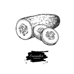 Cucumber hand drawn vector. Isolated cucumber and sliced pieces.