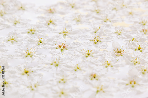 Pink Small Flowers On The Water Floral Pattern Wedding Spring