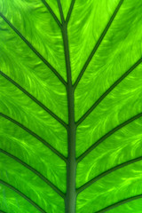 Large green leaf fragment with veins, abstract background
