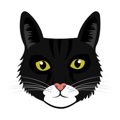 colorful avatar cat animation front view over isolated background,vecor illustration