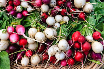 Colorful organic radishes at a local farmers market.