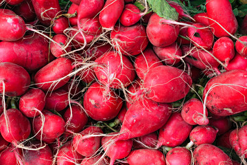 Fresh organic radishes at a local farmers market