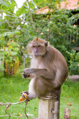 monkey eating some food and sitting on the pole