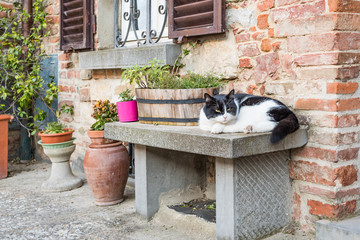 The black and white cat resting on the bench