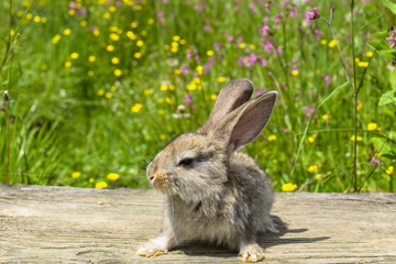 Rabbits . Beauty art design cute little Easter Bunny . Spring flowers and green grass.