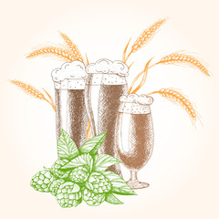 Vector illustration of beer. Raw material for brewing: branch hops and barley. Pub menu.