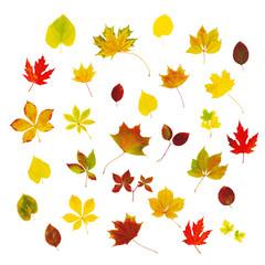 Viele verschiedene bunte Herbstblätter isoliert