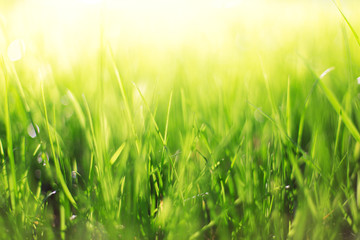 Abstract spring background of blurred grass and sunbeam