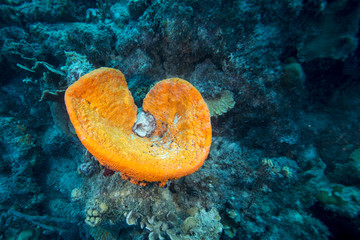 Unterwasser - Riff - schwamm - Tauchen - Curacao - Karibik