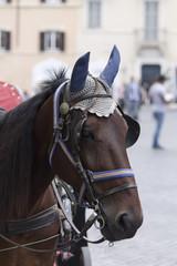 cavallo della botticella