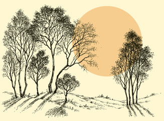Sunset in the forest. Trees wallpaper. Landscape sketch