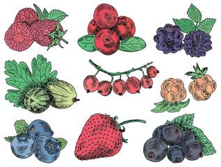 berries garden, blackberries, blackberry, boysenberry, currants, dewberry, gooseberries, mulberry, raspberry, strawberry, mountain ash, blueberry, cloud berry
