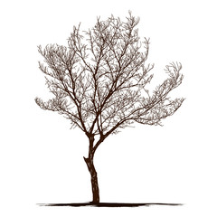 silhouette dead tree without leaves. isolated plant vector