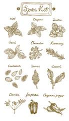 Spice Kit. Hand drawn vector illustration. Graphics style. Contains: mint, oregano, basil, coriander, rosemary, cardamon, sumac, laurel, cumin, paprika and cayenne paper.