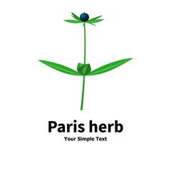 Plant with poisonous berries Paris herb