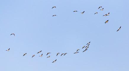 a flock of seagulls against a blue sky