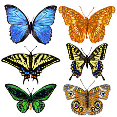 Set of vector colorful butterflies
