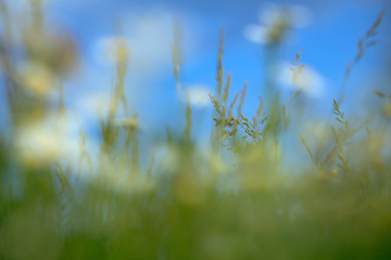Green grass closeup on blue sky