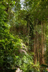 Evergreen jungle forest in sunny day. Natural background. Thailand