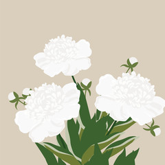 Vintage Watercolor peony flowers Vector isolated on white. Cream white peonies bouquet. Watercolor, hand painted, isolated on white background. Vector illustration