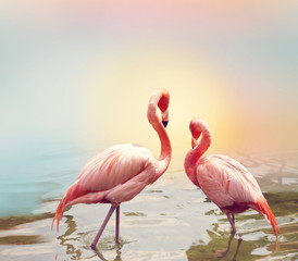 Two Flamingos near water