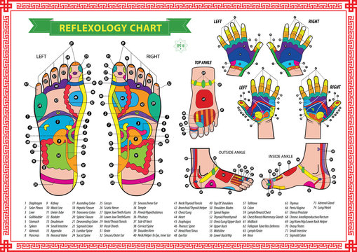 oot and Hand reflexology chart with accurate description of the corresponding internal and body parts. Vector illustration over white background, isolated.