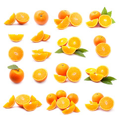 slice oranges collection