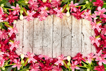 colorful pink blossom blooming flower border and frame on wooden background with copy space for text