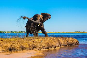 Lone elephant clean river silt