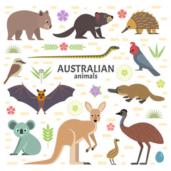 Vector illustration of Australian animals: moose, flying fox, kangaroo, koala, Tasmanian devil, echidna, wombat, emu, cockatoo, platypus, isolated on transparent background.