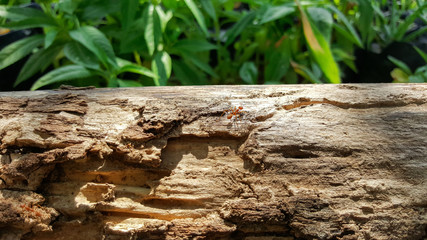 ant running and work on old wood bridge with sunlight , green na