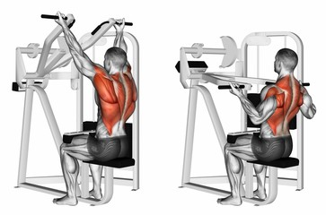 Reverse grip machine lat pulldown. Exercising for bodybuilding Target muscles are marked in red. 3D illustration