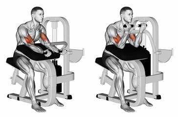 Curls on the simulator. Exercising for bodybuilding Target muscles are marked in red. 3D illustration