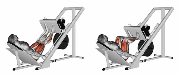 Inclined leg press. Exercising for bodybuilding Target muscles are marked in red. 3D illustration