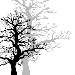 Vector trees silhouette.