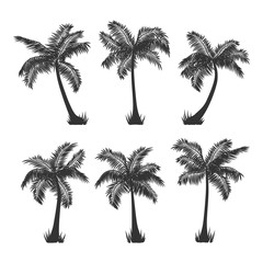 Exotic tropical coconut palm trees silhouette set, isolated on white background. Vector illustration