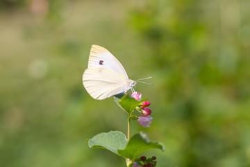 Beautiful butterfly sitting on flower.