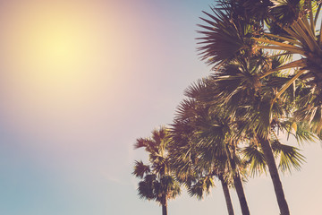 Tropical palm tree at beach. VIntage filter