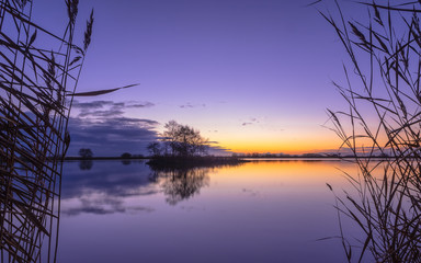 Wall Mural - Silhouette of Reed at serene Lake during Purple Sunset