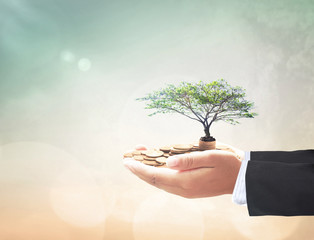 Investment concept: Businessman hand holding stacks of golden coins and big tree.